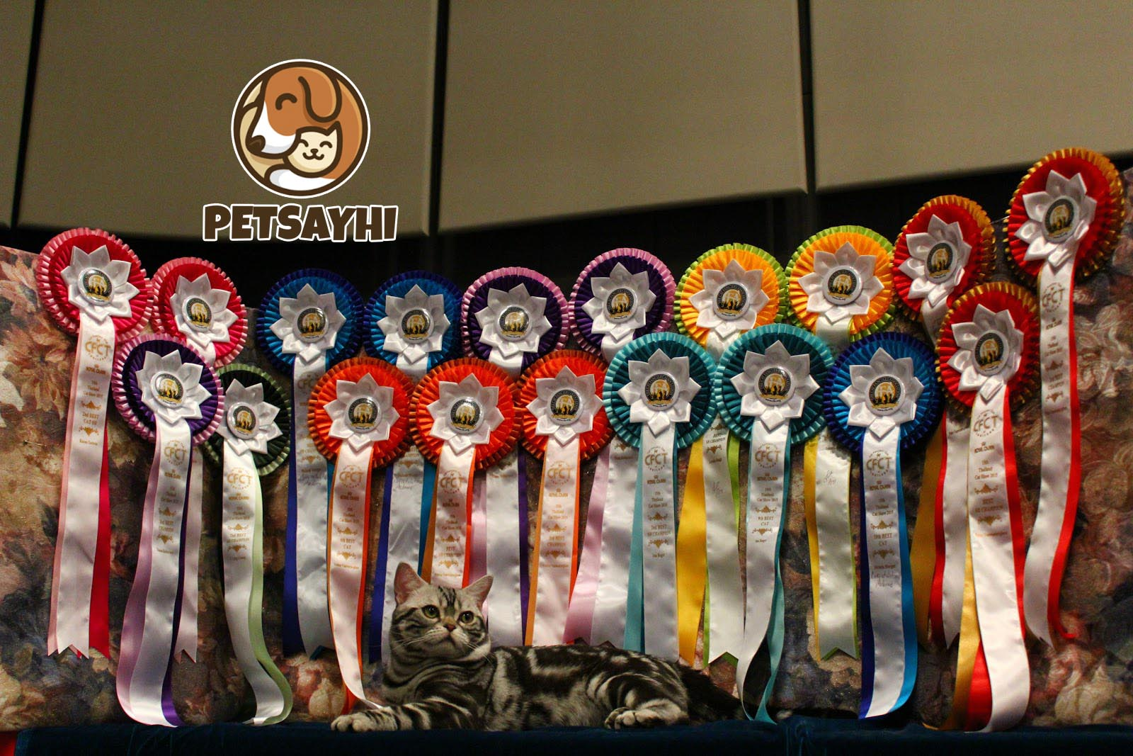 5 อันดับ ฟาร์มแมวคุณภาพในไทย