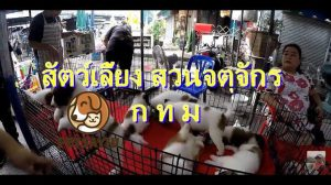สถานที่แนะนำร้านขายสัตว์เลี้ยง