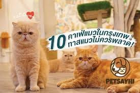 10 อันดับ คาเฟ่แมว ยอดนิยมอัพเดทล่าสุด ตอน 1