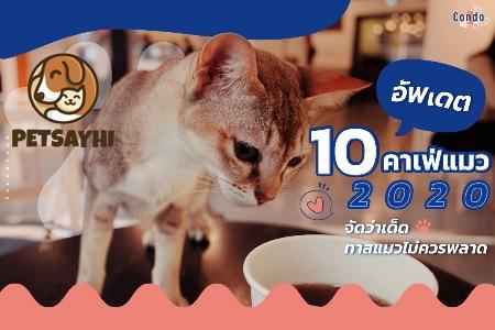 10 อันดับ คาเฟ่แมว ยอดนิยมอัพเดทล่าสุด ตอน 2