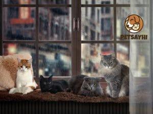 10 อันดับ ที่นอนแมวและยี่ห้อยอดนิยม ตอน 1