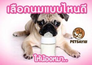 นมสำหรับสุนัข ยี่ห้อยอดนิยม ตอน 1