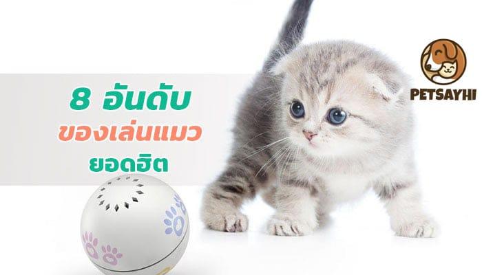 8 อันดับ ของเล่นแมวยอดฮิตควรมีติดบ้าน ตอน 1