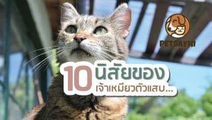 นิสัยแมว 10 อย่างที่ควรรู้ก่อนนำมาเลี้ยง ตอน 2