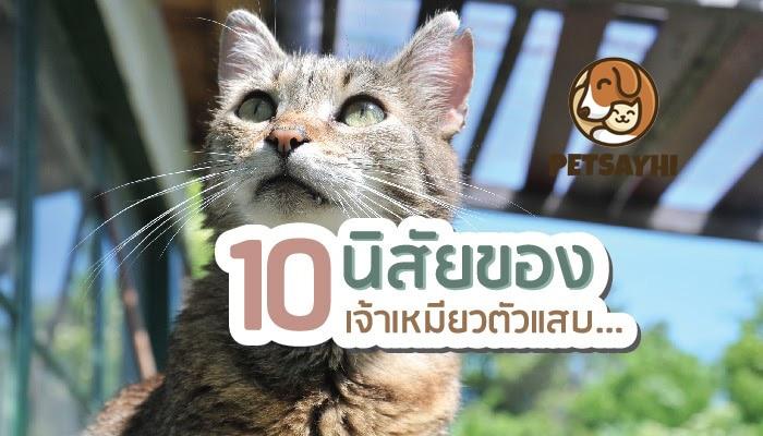 นิสัยแมว 10 อย่างที่ควรรู้ก่อนนำมาเลี้ยง ตอน 1