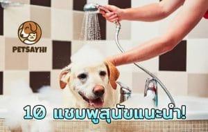 10 แชมพูสุนัข ยี่ห้อยอดนิยม