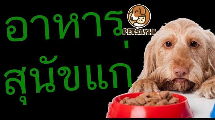 Orijen Senior หนึ่งในยี่ห้ออาหารสุนัขคุณภาพ ที่เคยได้รับรางวัลระดับโลกมามากมาย สูตรนี้ผลิตมาเป็นพิเศษ สำหรับน้องหมาสูงวัยที่มีอายุตั้งแต่หกปีขึ้นไป เป็นช่วงแรกเริ่มที่กำลังจะก้าวสู่วัยชรา มีส่วนผสมมาจากเนื้อไก่ เนื้อปลาและไข่ไก่ที่สดใหม่ มีสารอาหารที่จำเป็นและปราศจากคาร์โบไฮเดรต ช่วยซ่อมแซม ในส่วนไขกระดูกที่สึกหรอได้ดี โภชนาการครบถ้วนทุกอย่าง Hill's Youthful Vitality อาหารสำหรับสุนัขแก่สูงวัย ที่มีสารอาหารหลายอย่าง ซึ่งรับประทานเข้าไป เพิ่มความมีชีวิตชีวาให้กับน้องหมา และสร้างแรงกระตุ้น ให้สุนัขอยากขยับเขยื้อนร่างกายมากกว่าเดิม มีสารต้านอนุมูนอิสระ และวิตามินจำเป็น ช่วยซ่อมแซมสมองในระบบภูมิคุ้มกัน แถมยังย่อยได้ง่ายอีกด้วย Royal Canin Mature Small Dog เหมาะสำหรับน้องหมาสายพันธุ์เล็ก ที่มีอายุตั้งแต่8ปีขึ้นไป ช่วยในเรื่องการเคี้ยวและรับประทานได้ง่ายขึ้น เป็นสูตรพิเศษทางการแพทย์โดยเฉพาะ มีปริมาณแร่ธาตุที่เหมาะสม ช่วยให้ระบบไตและหัวใจแข็งแรงขึ้น ทำให้ระบบเลือดไหลเวียนได้ดี ซึ่งหมาขนาดเล็กทานได้ทุกสายพันธุ์ Hill's Healthy Cuisine อาหารสำหรับสุนัขสูงวัยชนิดเปียก มีแร่ธาตุรวมถึงวิตามินที่สำคัญสูงพอเหมาะ ไม่มีสารกันบูดและไม่แต่งกลิ่น ส่วนผสมหลักทำมาจากไก่ย่าง รวมถึงผักขมและแครอท ช่วยเรื่องระบบขับถ่ายได้ดีด้วย พร้อมทั้งสร้างและซ่อมแซมภูมิคุ้มกัน เหมาะสำหรับสุนัขแก่ในทุกสายพันธุ์ Smart Heart Fit&Firm เหมาะสำหรับสุนัขแก่สูงวัยสายพันธุ์เล็ก ปราศจากไขมันที่ไม่จำเป็นต่อร่างกาย ช่วยซ่อมแซมและบำรุงกระดูกข้อต่อ มีรูปแบบเม็ดขนาดเล็ก ทำให้รับประทานได้ง่าย กระตุ้นระบบผิวหนังและเส้นขนให้แข็งแรง แถมราคายังไม่แพง มีประโยชน์ต่อน้องหมาขนาดเล็กทุกสายพันธุ์ นอกเหนือจากสารอาหารที่จำเป็นแล้ว ความใส่ใจเป็นพิเศษจากเจ้าของ เป็นอีกหนึ่งเรื่องสำคัญสำหรับสุนัขสูงวัย และทั้งหมดนี้ก็คือ บทความอาหารสุนัขแก่สูงวัย หวังว่าคงจะเป็นประโยชน์ สำหรับคนที่รักน้องหมาทุกคนนะครับ ภาพประกอบ my-best.in.th