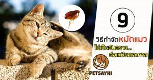 วิธีแก้หมัดแมว ตอน 1