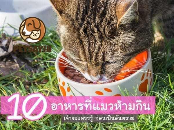อาหารที่แมวห้ามกิน
