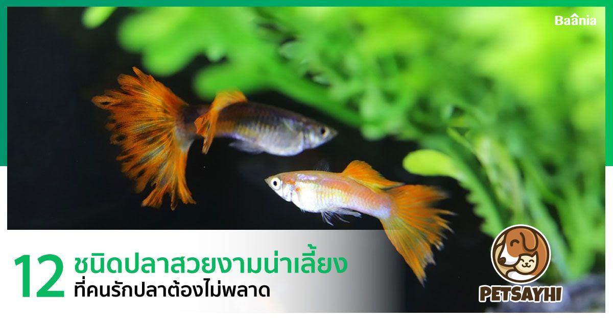 จัดอันดับปลา