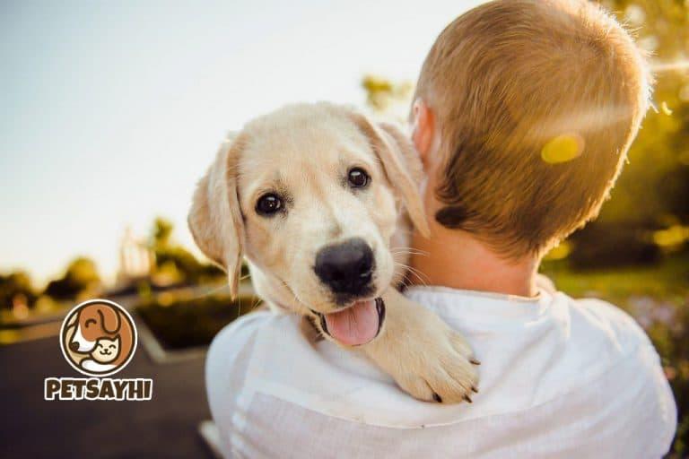 น้องหมา สิ่งสำคัญที่ควรมี ก่อนจะเลี้ยง