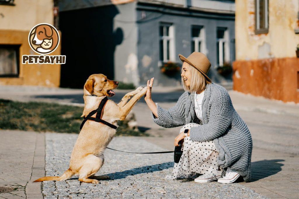 น้องหมา เทคนิคการฝึกสุนัขเบื้องต้นด้วยตัวเอง